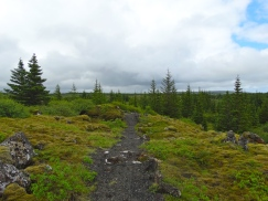 Mountain biking through lava fields at Heidmork