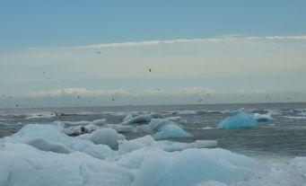 Where icebergs meet the sea